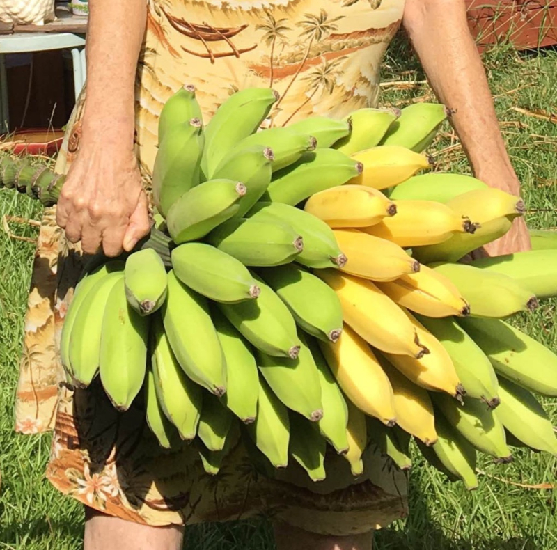 Big bananas crop